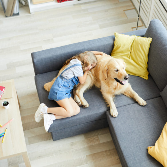 Ban on Landlords Charging Extra Pet Rent? Property Management Will Optimise Monthly Incomes!